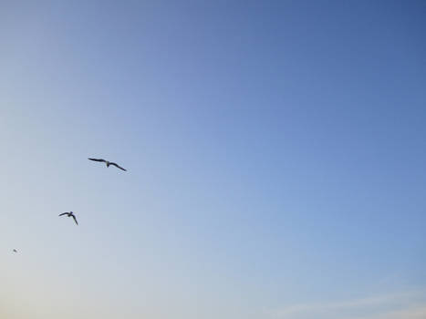 Flying with the gulls 2