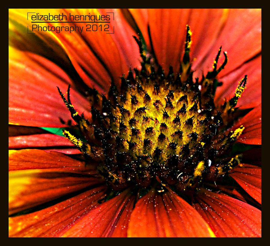 Pollen Filled by mariquasunbird1