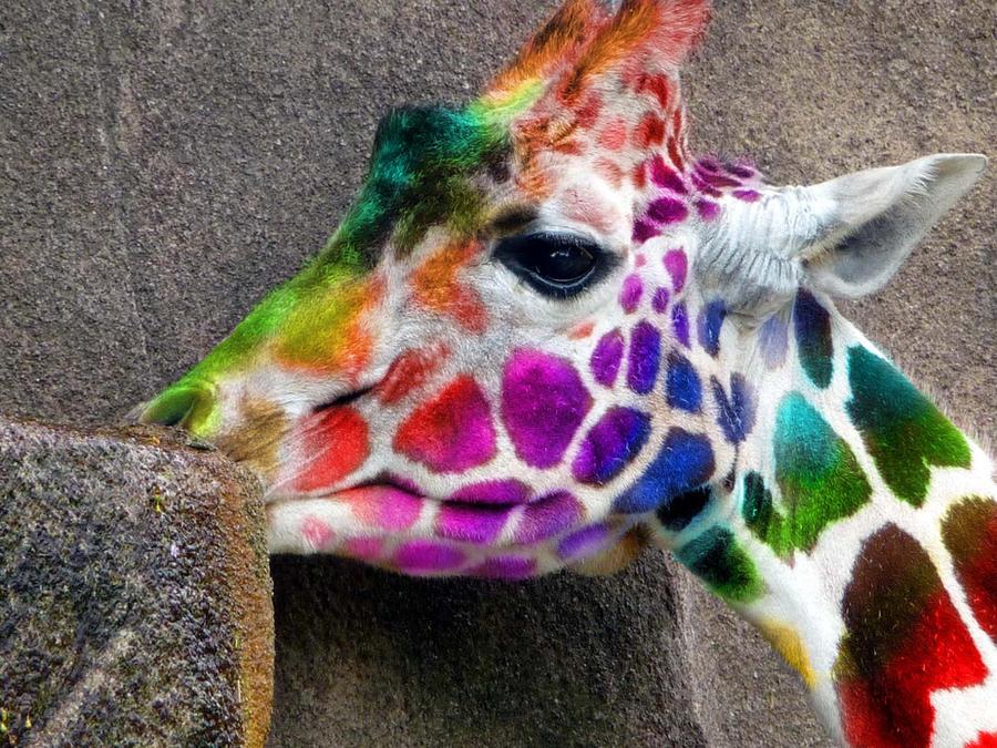 Gay girafe
