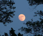 Moon Stock