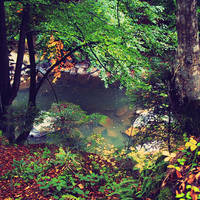 river-pond
