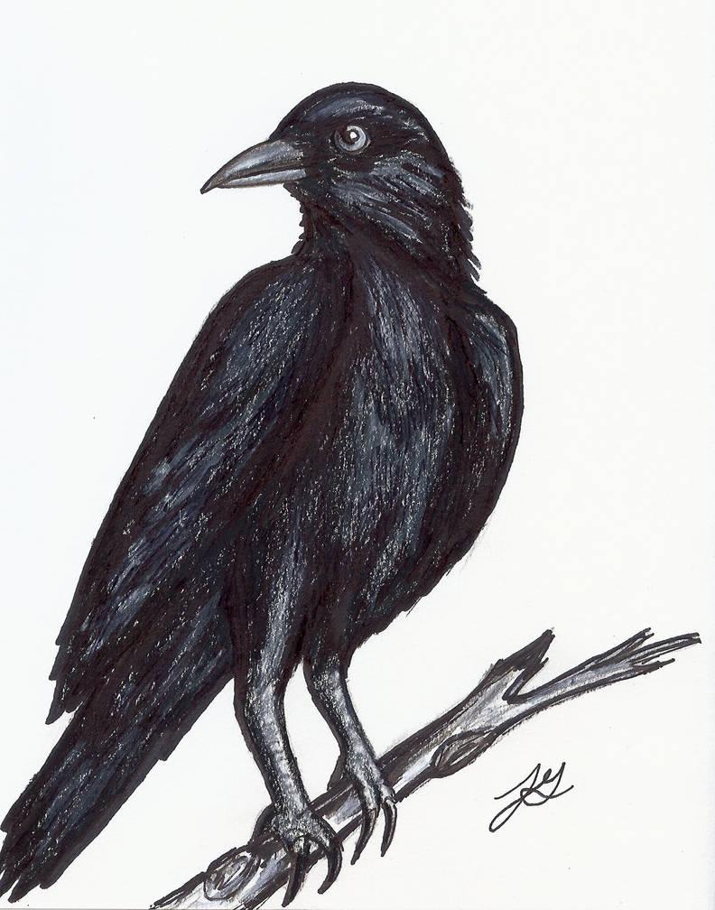 Raven by jengolem