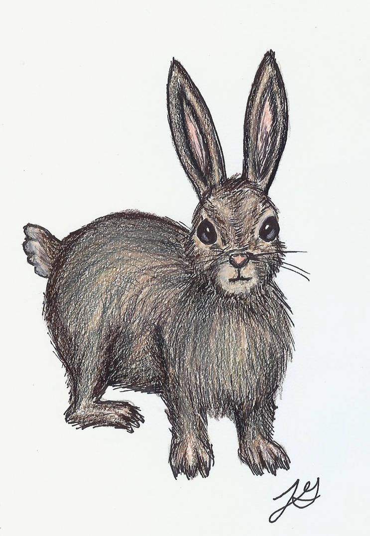 Rabbit by jengolem