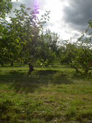 Orchard 14