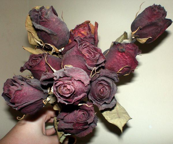 Dead Roses By Gsdark Stock