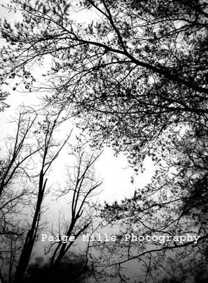 Serendipity by PaigeMillsArt