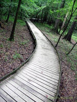 Congaree National Park ~ South Carolina by PaigeMillsArt