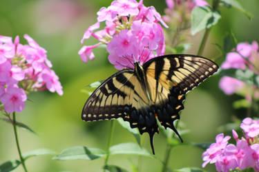 Nectar Tester