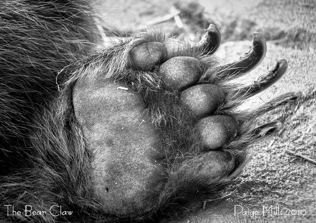 The Bear Claw by PaigeMillsArt