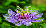 Full Bloom Delight