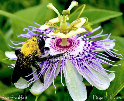 Bees Breakfast