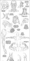 Upper Body Muscle Tutorial