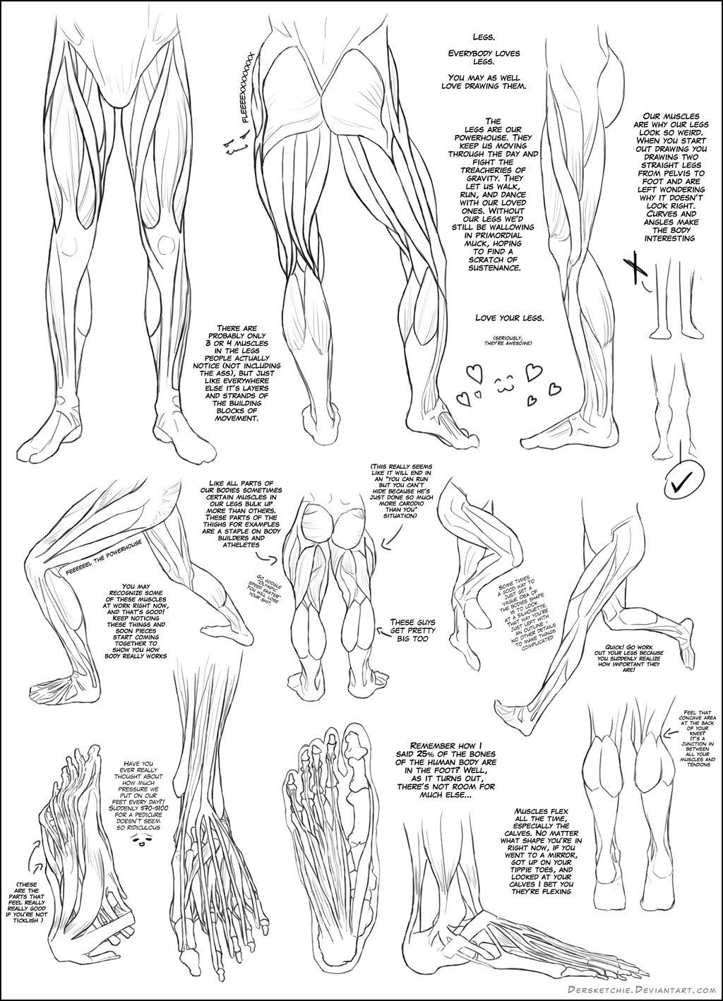 Muscles - Lower Body
