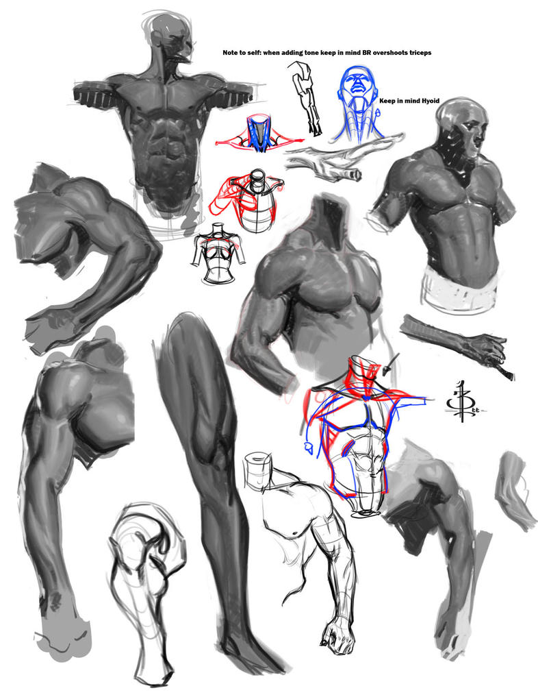 Anatomy studies 2 by FUNKYMONKEY1945