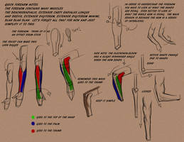 Intro to the forearm