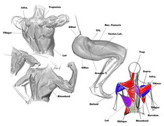 Old Anatomy notes by FUNKYMONKEY1945