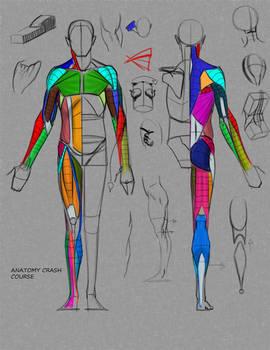Anatomy Crash Course