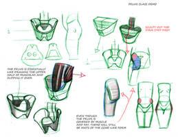 Pelvis Notes Sculptural Anatomy Class by FUNKYMONKEY1945