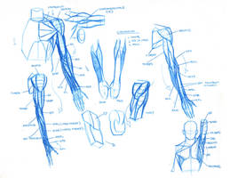 Notes for my Sculptural Anatomy Class by FUNKYMONKEY1945