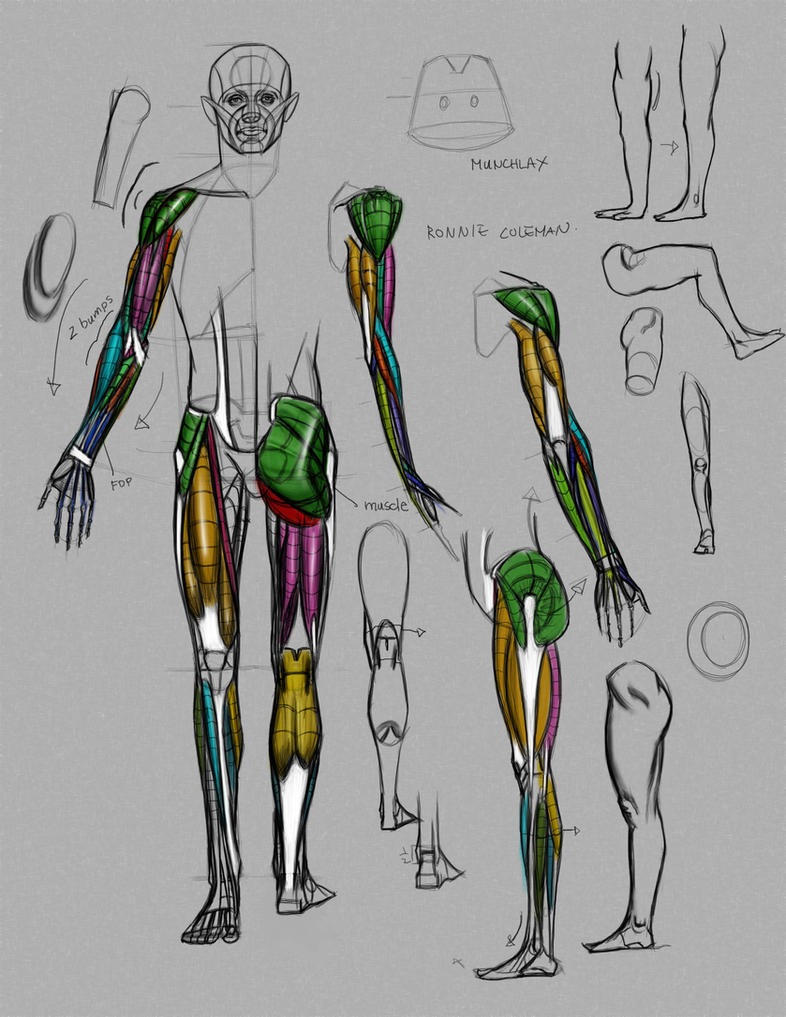 Anatomy Demo from Online class by FUNKYMONKEY1945 on DeviantArt