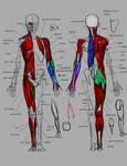 Anatomy demo