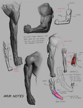 Arm notes