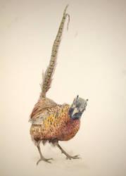 Pheasant by AenagGaz