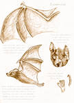 Animal Study: Bat
