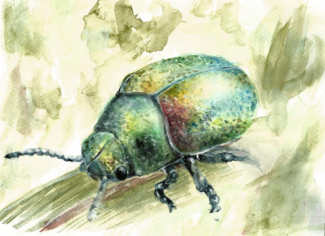 Homework: Bug/Beetle by lOyamaneko