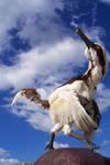 buitreraptor Gonzalezorum by Gonzalezaurus