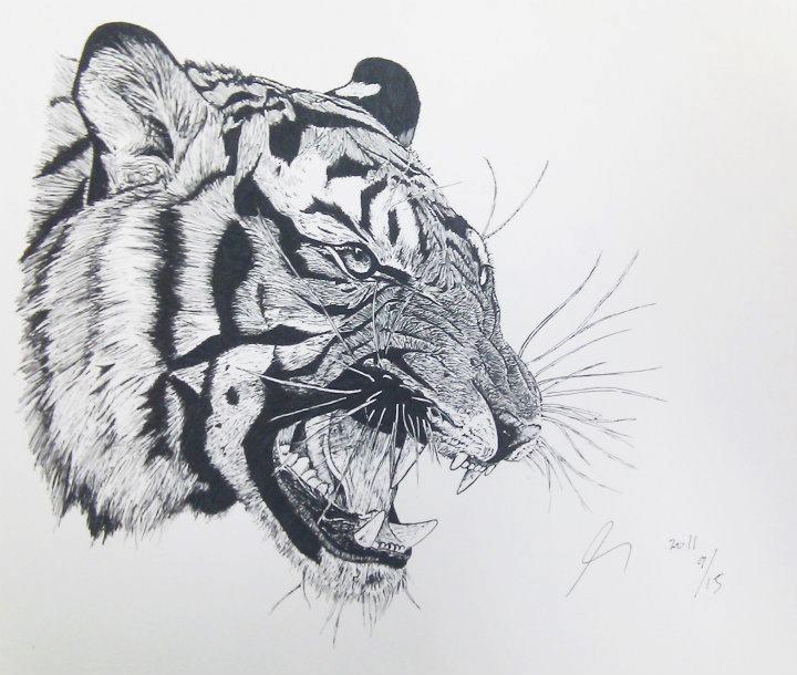 angry tiger by monda123 on DeviantArt