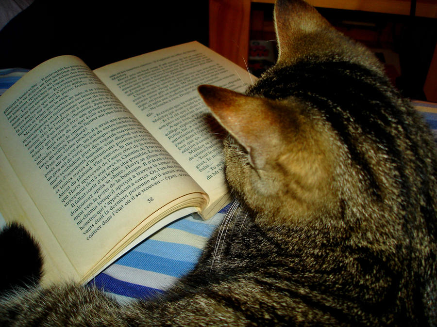 cat reading by Monochromatiques