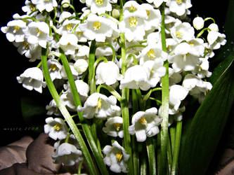 Lilly Of The Valley by minica