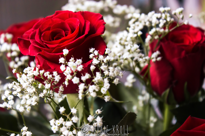 #Rose by Sophie0300