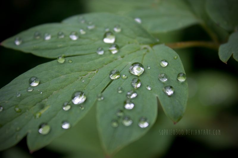 #Raindrops by Sophie0300