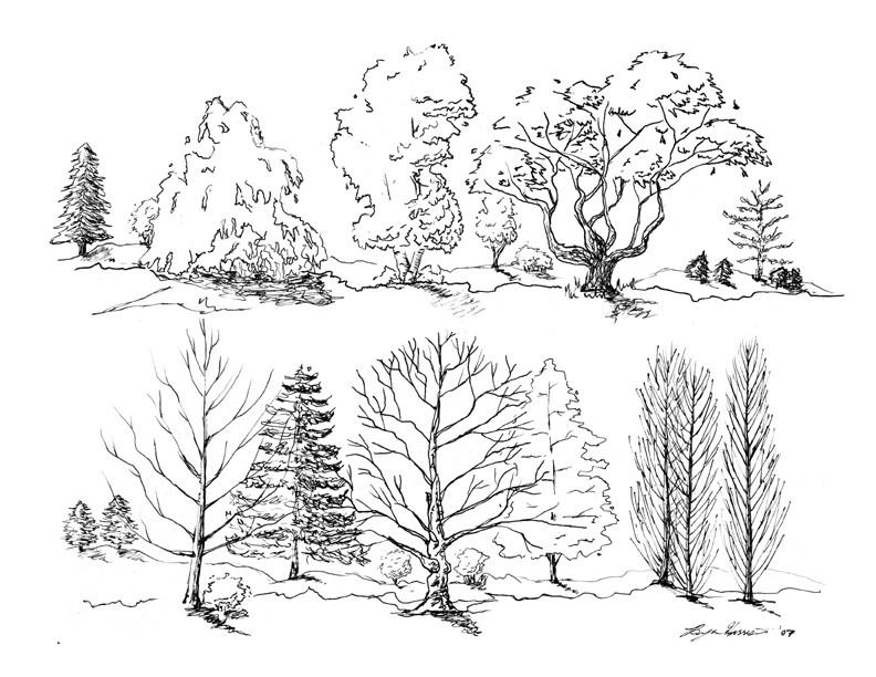 loose tree sketchesraineach on deviantart