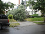 fallen down tree