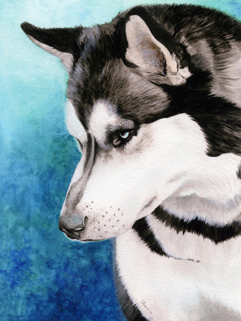 Siberian Husky in Watercolor by cdabroom on DeviantArt