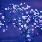 the finest flowers by lichtfaengerin