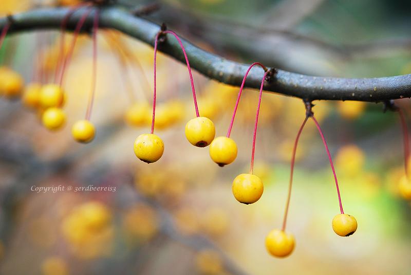 yellow berries garland by lichtfaengerin