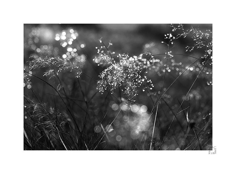 drops by lichtfaengerin