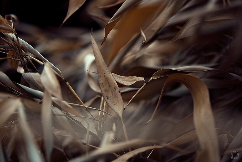 natur chaos by lichtfaengerin