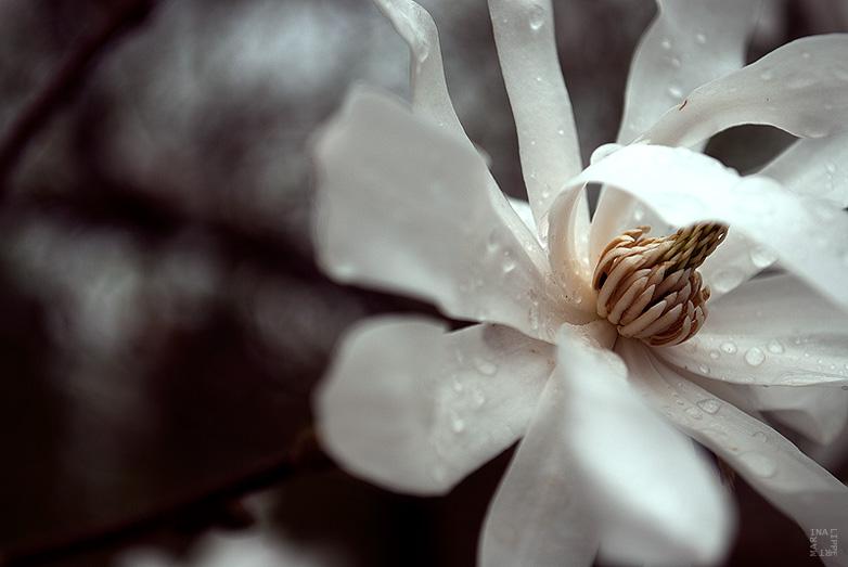 regenblumen by lichtfaengerin