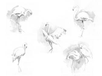 Birds by m-gnomik
