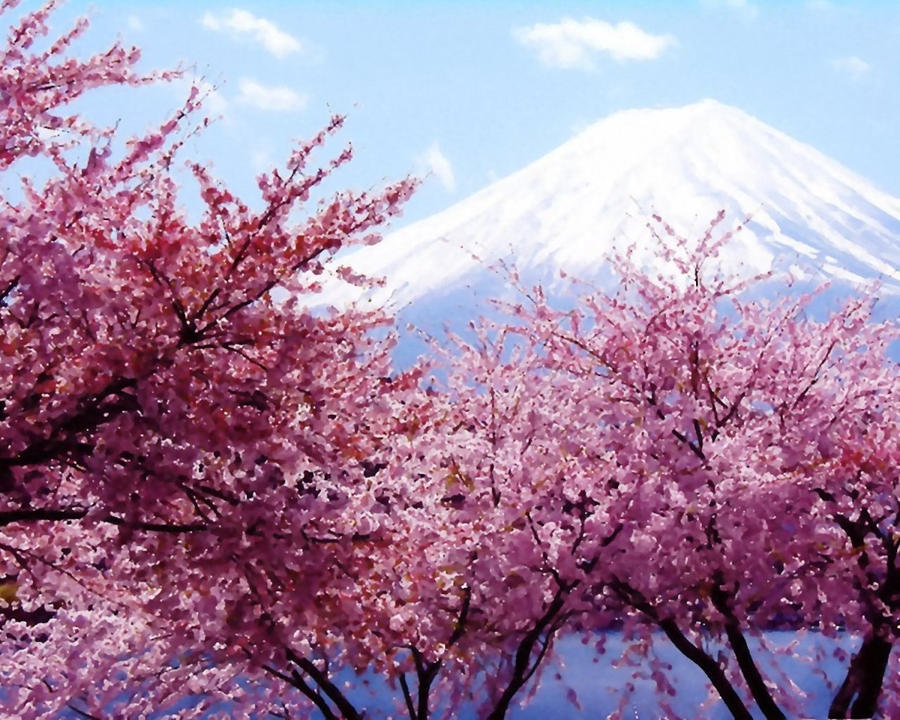 cherry blossem tree background wallpaper - photo #5