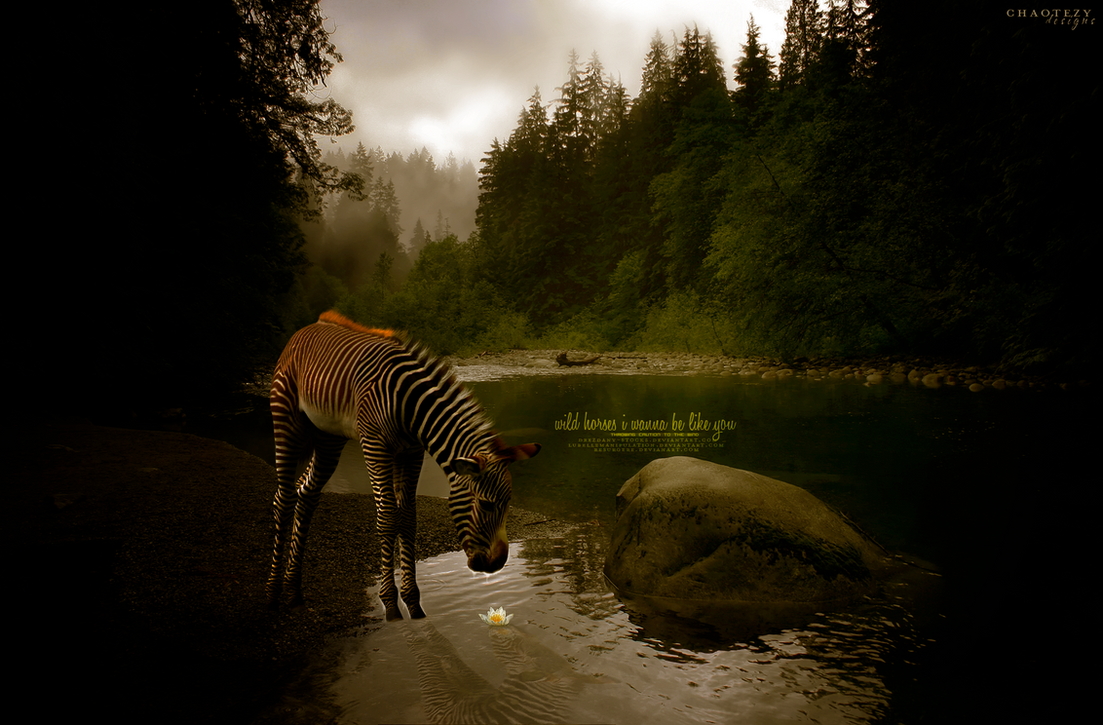 Wild Horses by chaotezy