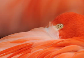 flamingo I i see you by filthyhandss