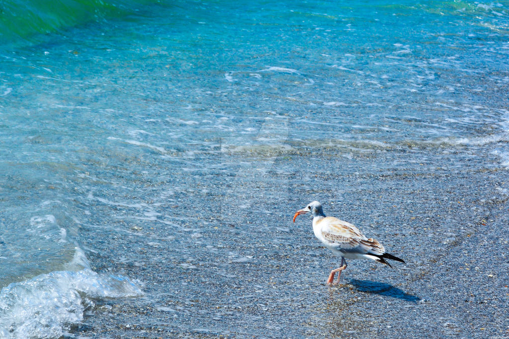 Sea bird with a shrimp by LicamtaPictures