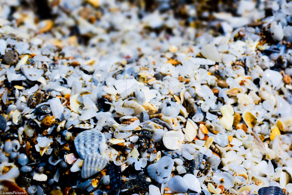 Seashells by LicamtaPictures