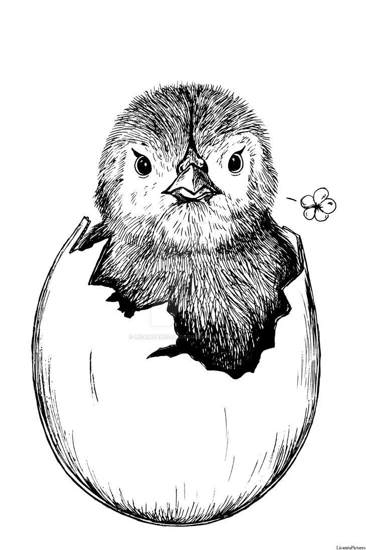 Inktober 2018 #5-Chicken by LicamtaPictures